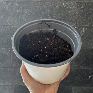 Pot with potting mix